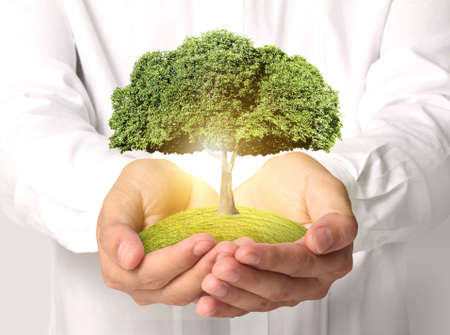 Businessman holding tree sprouting Standard-Bild