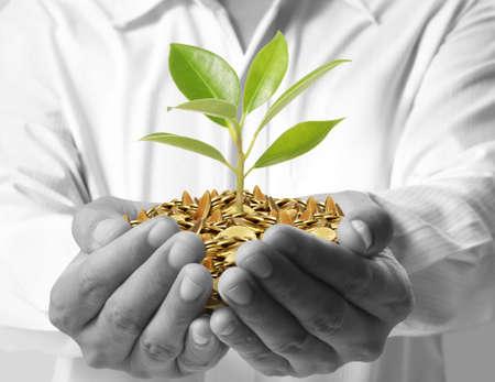 お金の手の中から成長しているツリー