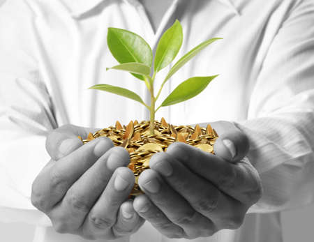 prosperous: Tree growing from money in hands  Stock Photo