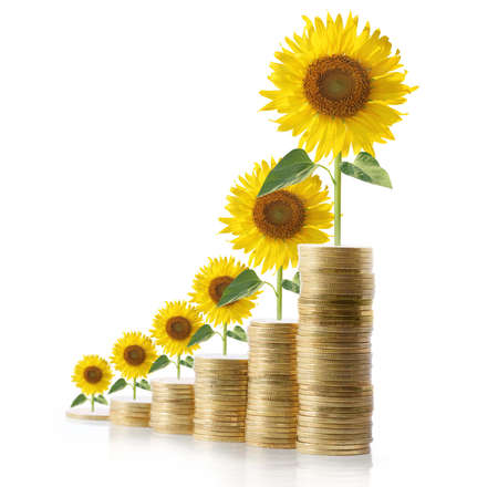concept invesment close up  sun flowers growing from coins  photo