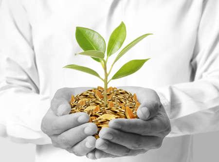 Tree growing from money in hands  Standard-Bild