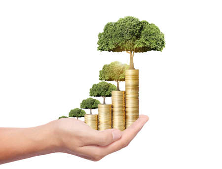 Concept of money tree growing from coins
