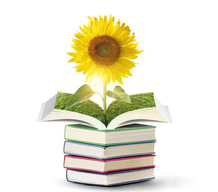 Open sun flowers growing book,with wood photo