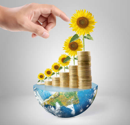 Sunflower and coins Money growth concept, Investments in stock market photo