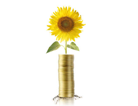 Sunflower and coins photo