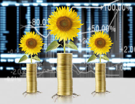 Sunflowers and coins photo