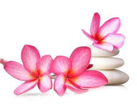 Frangipani flowers isolated on white background Stock Photo