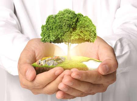 大きな木の萌芽を保持している実業家