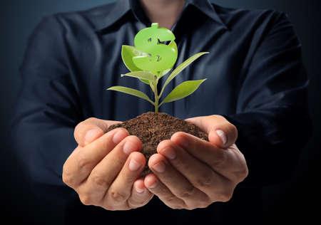grow money: Money growing on tree, Dollar signs