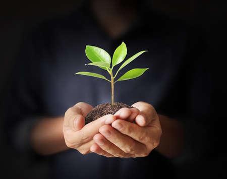 crecimiento planta: Cierre de las manos del hombre que sostienen la planta