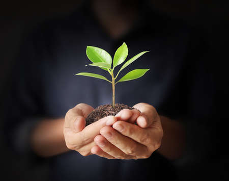 grow: Close up man hands holding plant Stock Photo