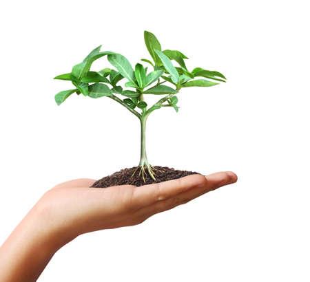 nurture: Close up hands holding plant