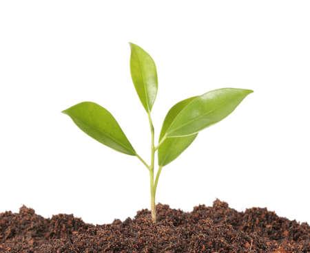 joven vida nueva planta, árbol joven verde Foto de archivo