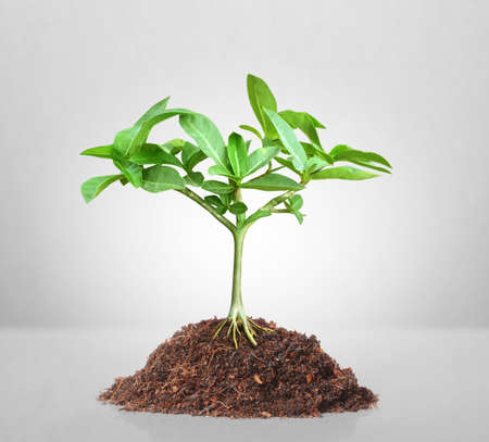 Young green plant and background