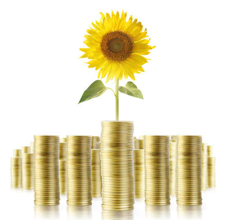 making earth: Sunflower and coins Money growth concept, Investments in stock market