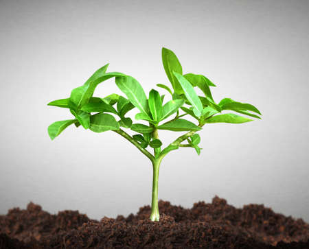 green plants: Growth of a green young plant