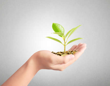 financial growth: Tree growing from pile of coins, investment concept