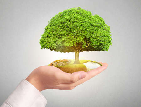 hands holding plant: Close up man hands holding plant Stock Photo