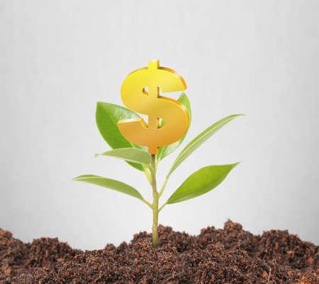 rural development: Money growing on tree, Dollar signs