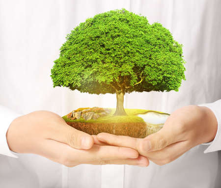 grower: Close up man hands holding plant Stock Photo