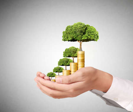 plant growing: Concept of money tree growing from coins Stock Photo