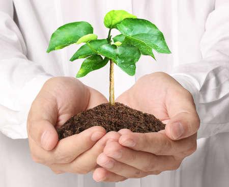 nurture: Close up man hands holding plant Stock Photo