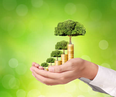 tree with leaves: Concept of money tree growing from coins Stock Photo