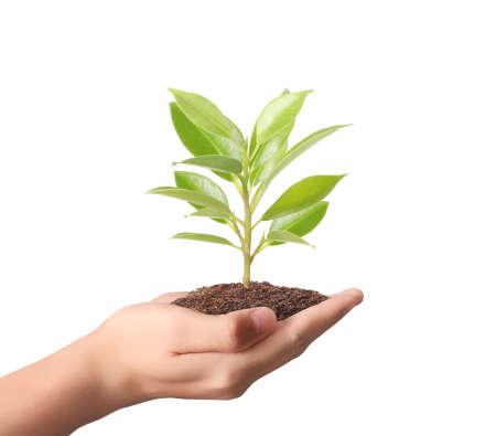 rural development: holding green plant in a hand