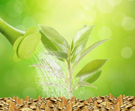 raices de plantas: Brote verde que crece de una