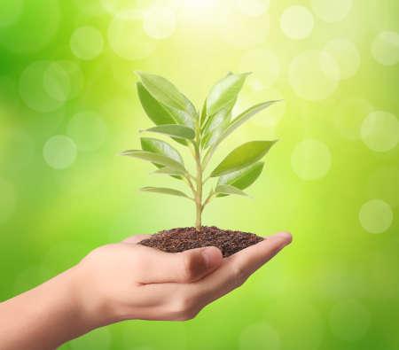 crecimiento planta: que sostiene la planta verde en una mano