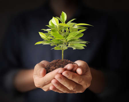 plant growing from in hand Stock Photo