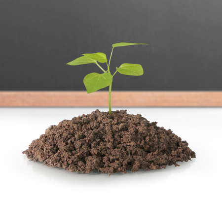 green plant tree growing seedling Stock Photo