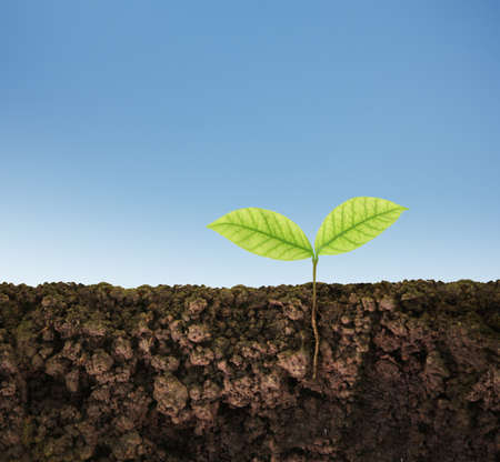 cultivating: green plant tree growing seedling Stock Photo