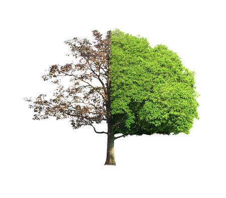 한쪽면의 죽은 나무와 살아있는 나무