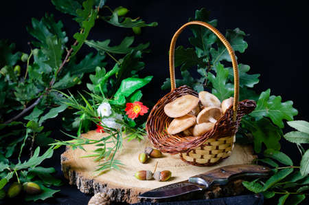 honey mushrooms in a small basket on a pine hemp with oak branches and acorns for the background Stockfoto