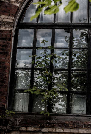 nascent: Nascent life in a dirty old crumbling window