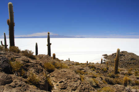 Isla Pescada in the middle of the Salar de Uyuni, the largest salt plain in the world Stock Photo - 4220991