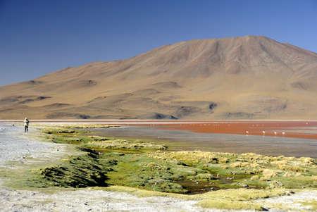 altiplano: Laguna Colorada, Altiplano, Bolivian Andes Stock Photo