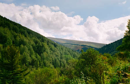 Landscape of the altai forests. Coniferous forests on the Altai.