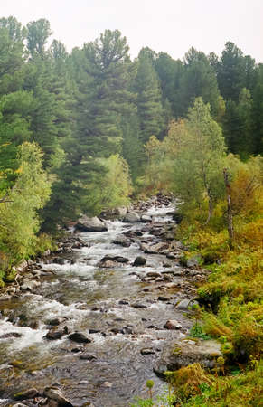 A small mountain river np Altai. Nature is altai. Stock Photo