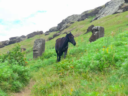 Grazing horses on Easter Island. Horses are a imported species for Easter Island.