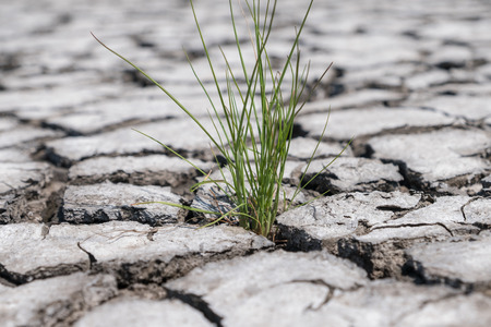 Grass which grew up in cracked earth soil
