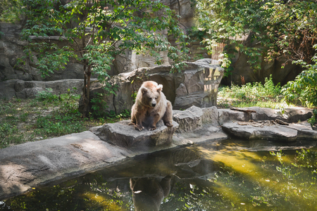 kiev: Big dangerous bear in the Kiev zoo