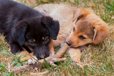 razas de personas: Two cute puppies lying on the grass