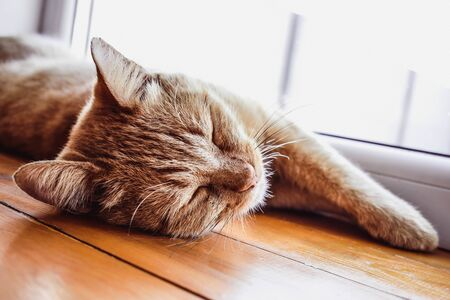 Redhead kitten sleeping on windowsill. Lovely cat relaxing, pink nose. A beautiful ginger cat named Peach. Imagens