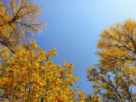 Bright autumn leaves of trees on a background of blue sky. Stockfoto