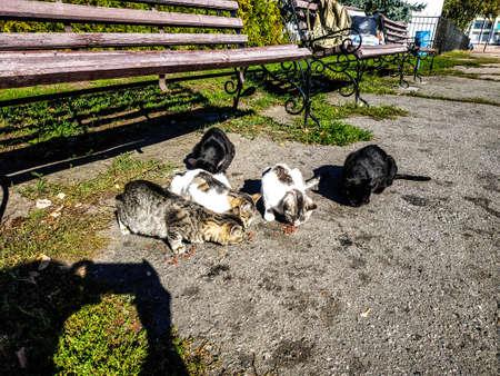 Homeless cats eat food near the bench, you can see the shadow of the photographer. Help homeless animals - they need it.
