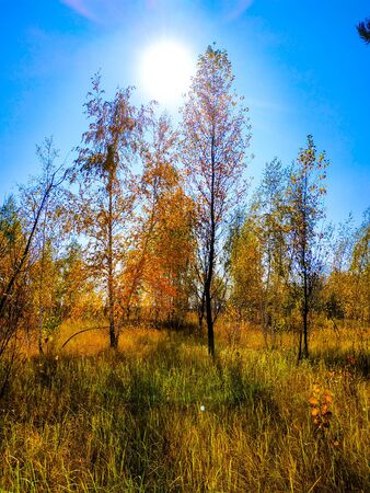 Beautiful autumn landscape, blue sky, sun, trees Golden autumn Stockfoto