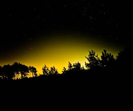 Night photography, tree strengths and beautiful stars. Mysterious atmosphere.