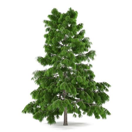 Tree pine isolated. Cedrus deodara Banco de Imagens